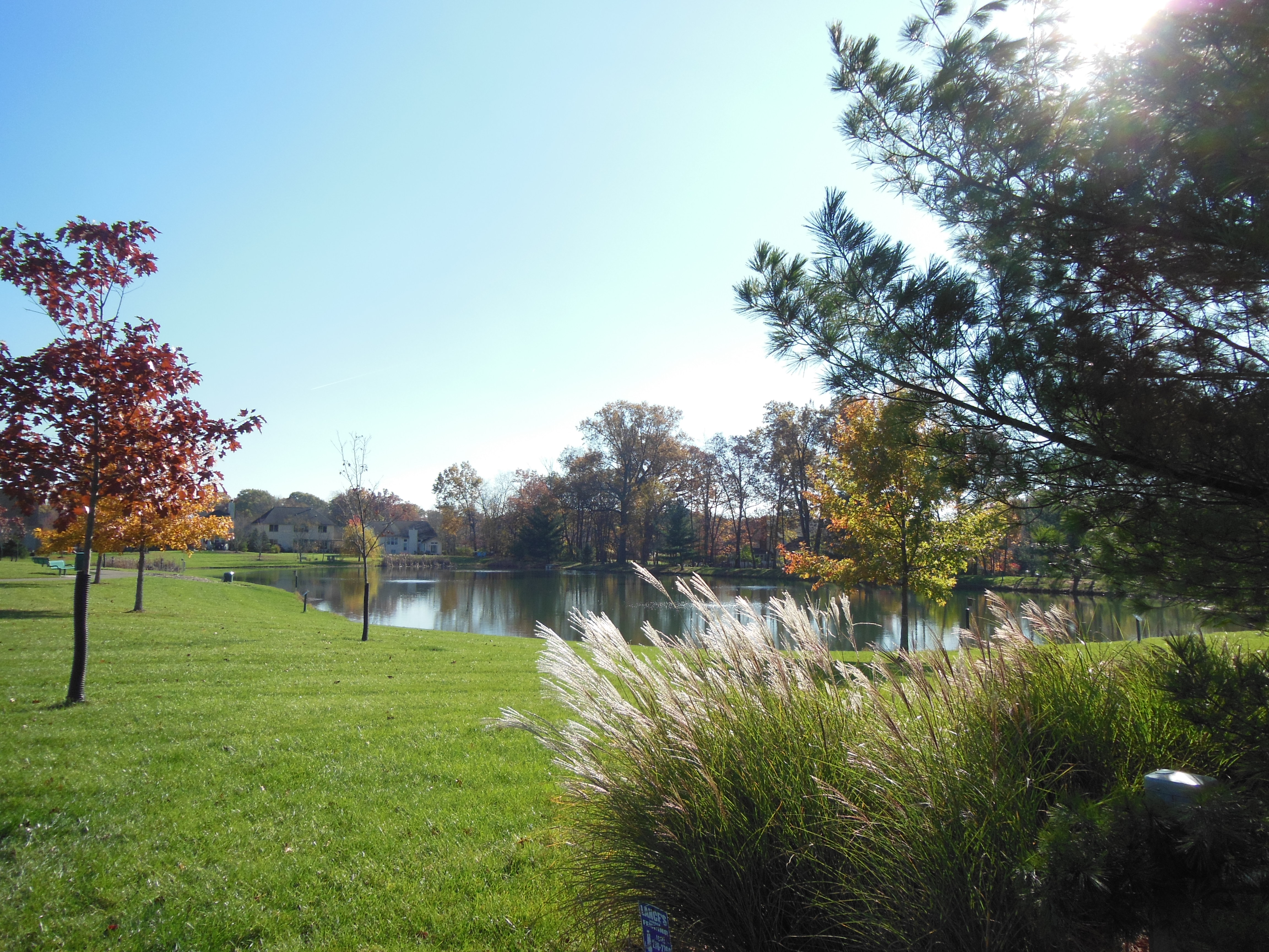 Pond in Meadow View Park
