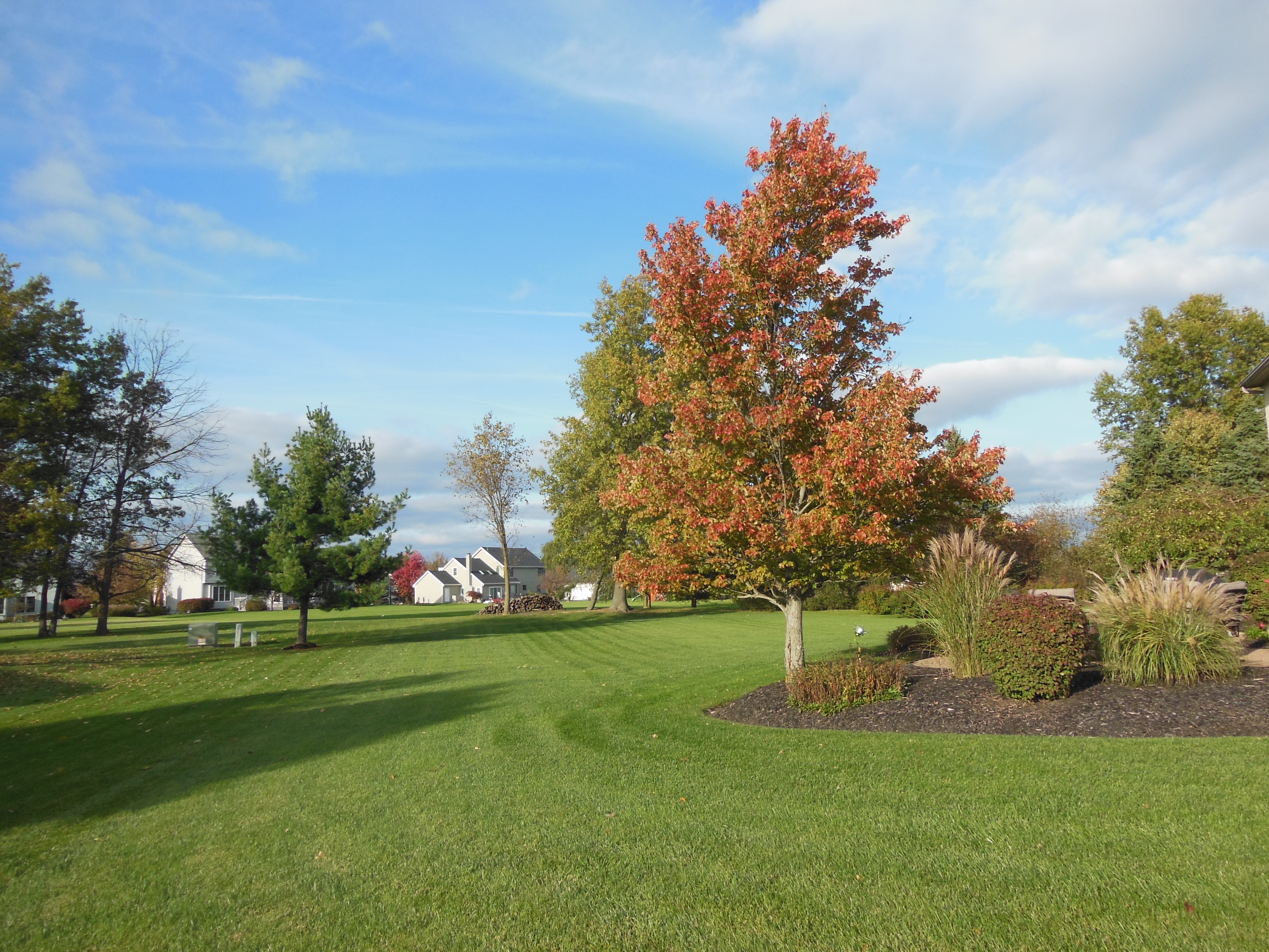 View of backyard - .51 acre