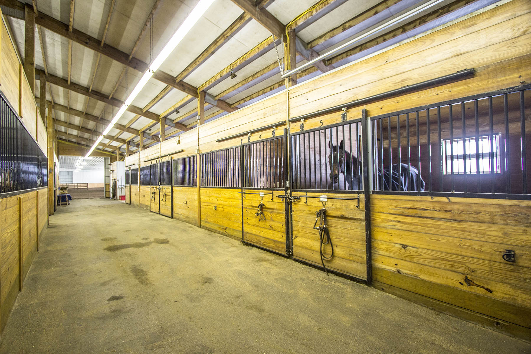 Lg Arena Floor Plan Photo Lg Arena Floor Plan Images Nec Birmingham Floor